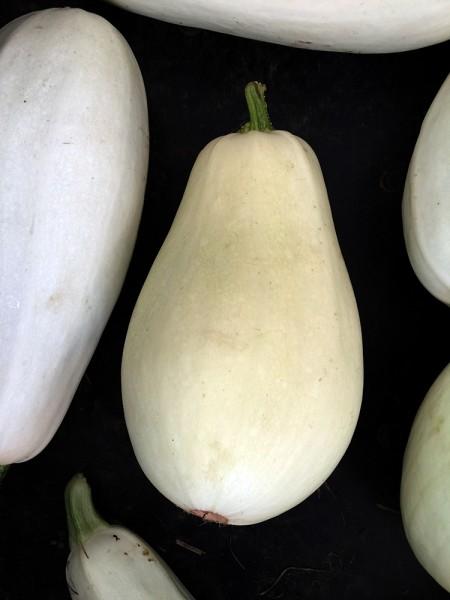 White_zucchini