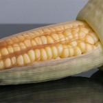 balinese_corn06