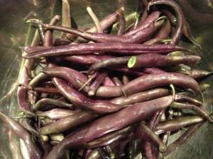 bean_royal_burgundy02