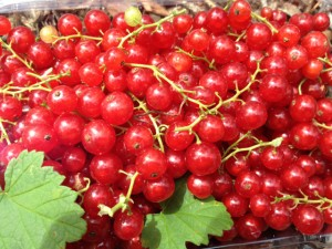 red_currants01