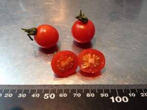 tomato_tiny01